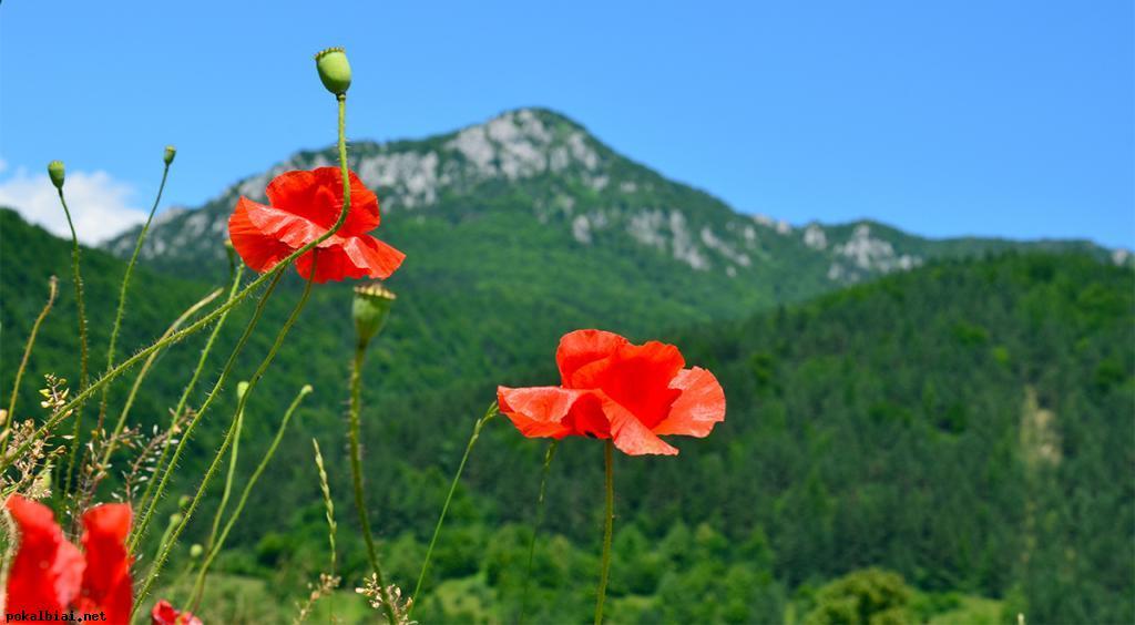 gamta slovakijoj