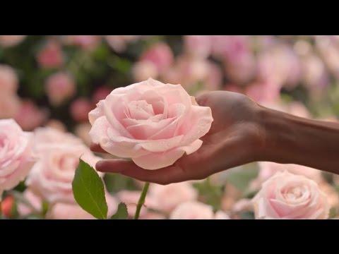 ߌٰߒ Happy Women's Day ְߒְߌ (When You Tell Me That You Love Me) ٰߒְߌ